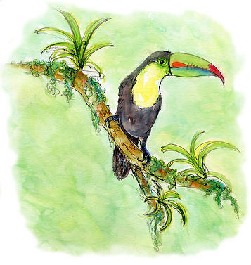 toucancloudedge2.jpg
