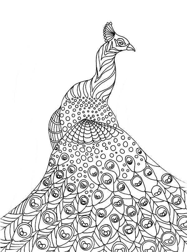 peacock.wrdsurch.jpg