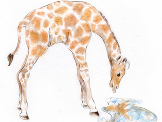 New baby giraffe at the zoo