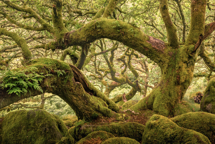 Dartmoor Wood
