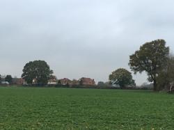 9b) 9c)  oaks