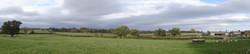 5 oaks in field north of moseley rd