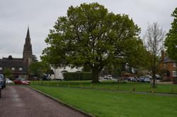 1 village green oak