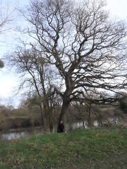7c oak 3 by severn