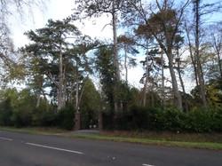 16 scots pines in garden of worcester ga