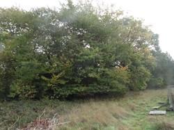 3 church field oak