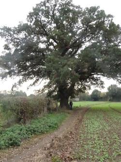 5b Pinch marker oak 2