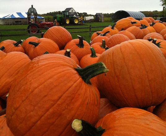 Corn Maze, Pumpkins