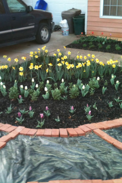 Flowerbed with pathway