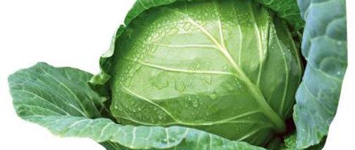 Cabbage - ക്യാബേജ്