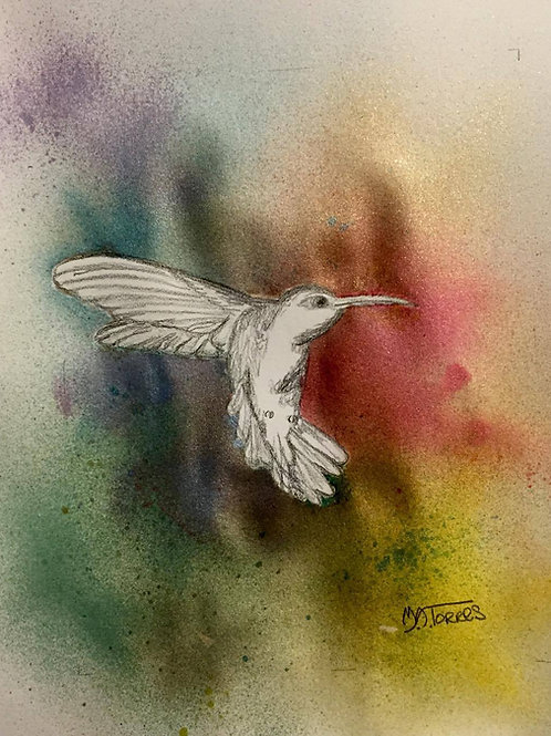 Hummingbird Pencil drawing