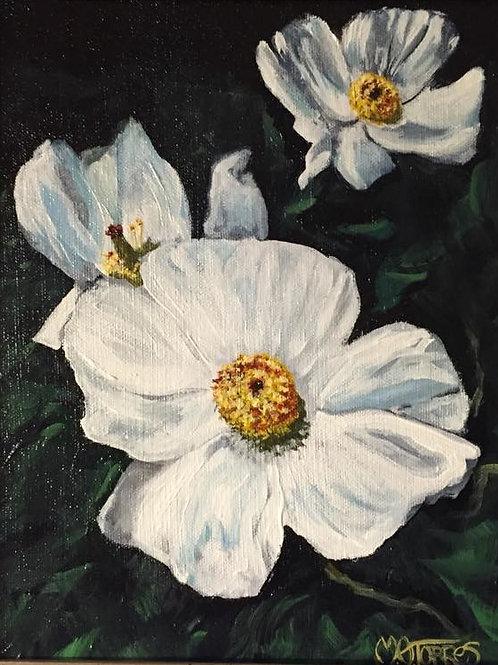 Wild White Poppies