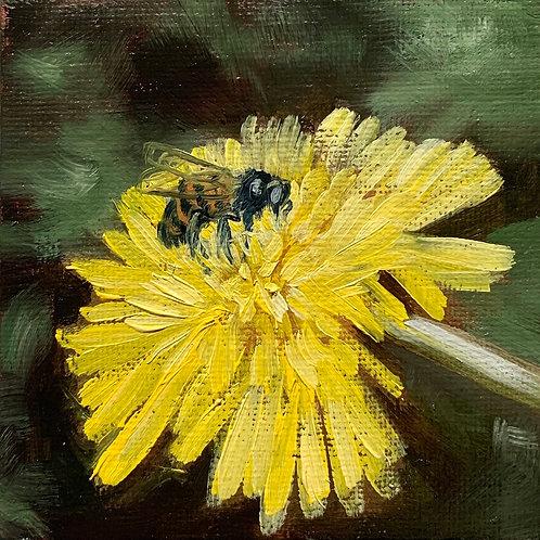 Honeybee & Dandelion 2