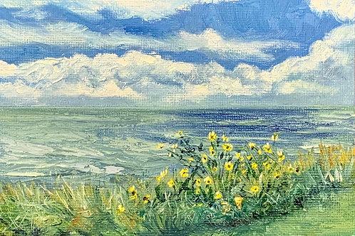 Bayside Sunflowers