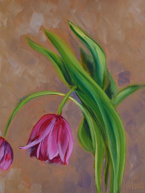 Take a Bow Tulips
