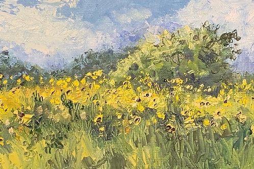 Oso Bay Sunflowers