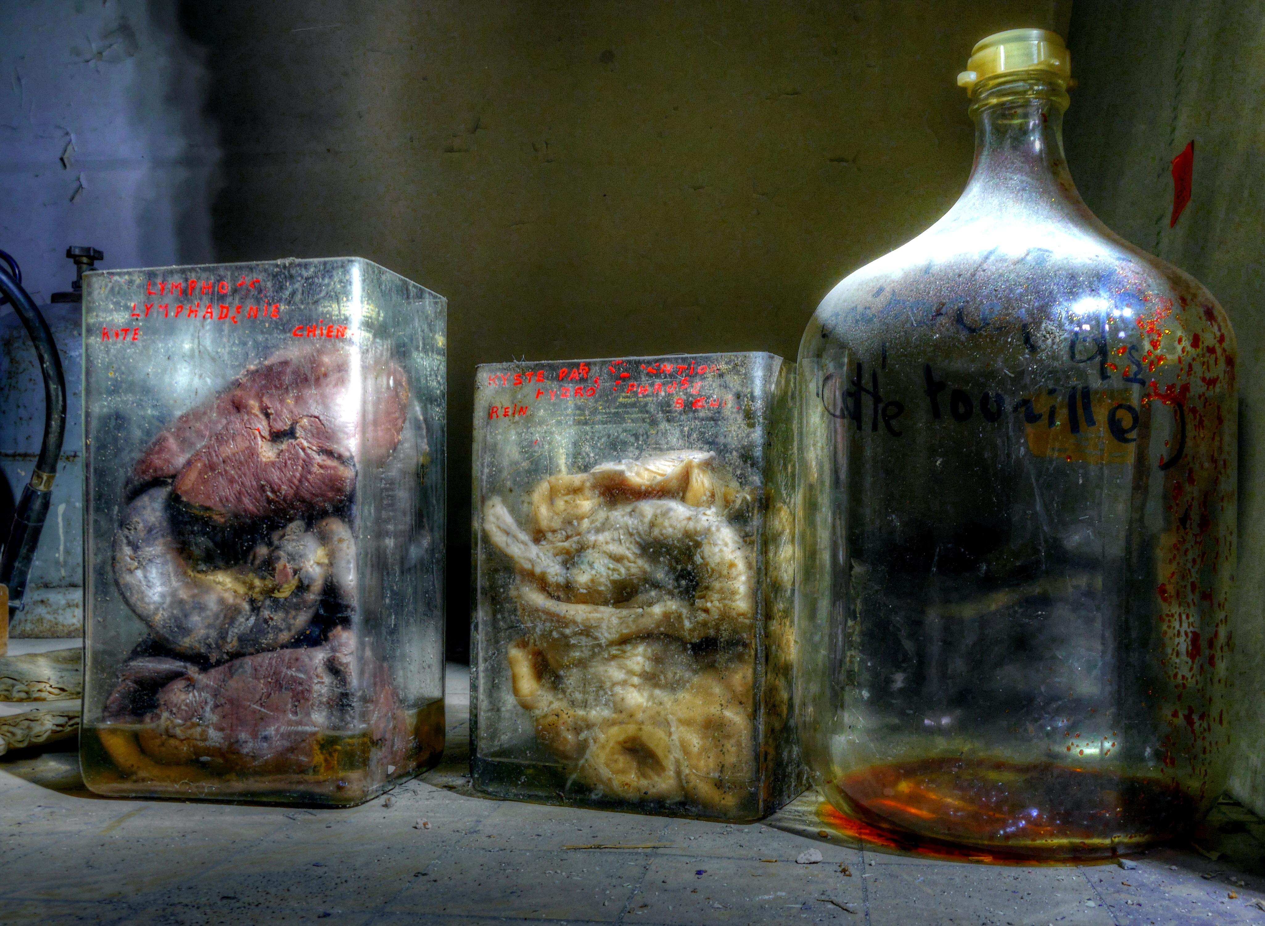 Horror Labs