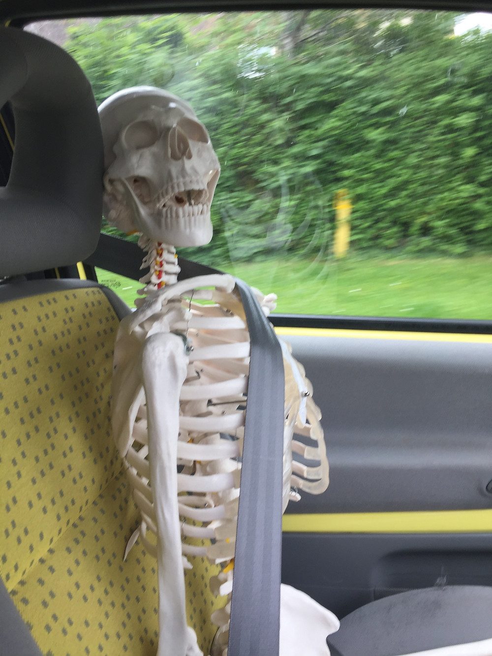 Skeleton in the car with a seatbelt on .