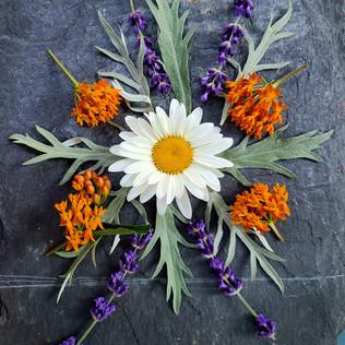 Mid-Summer Wild Flower Series