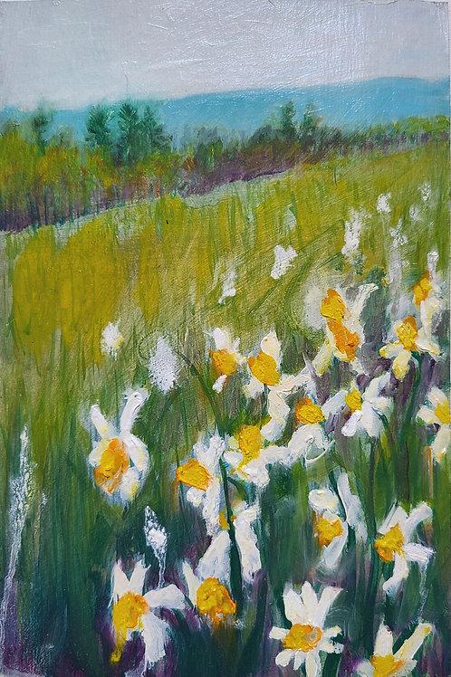 Daffodil Field 2