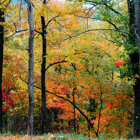 Watch the leaves change color from your porch!