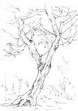 treesketch4.JPG