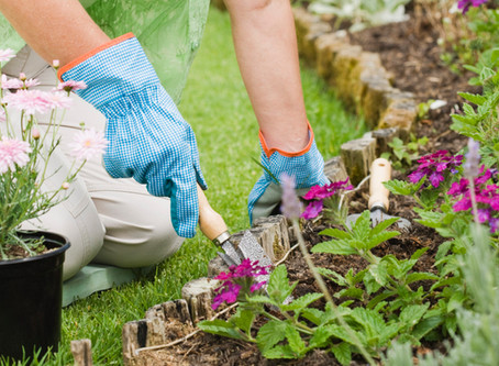 """""""Gardening is a matter of your enthusiasm holding up until your back gets used to it"""" ~ Au"""