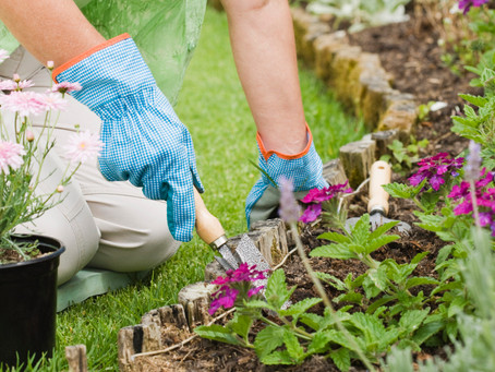"""Gardening is a matter of your enthusiasm holding up until your back gets used to it"" ~ Au"