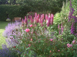 Rose and Lupins at Monks