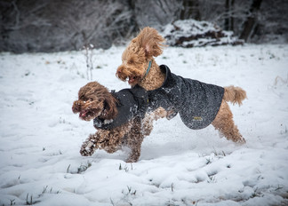 Playing in The Snow - Louise King - Some