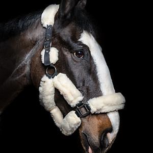 H.M Equestrian