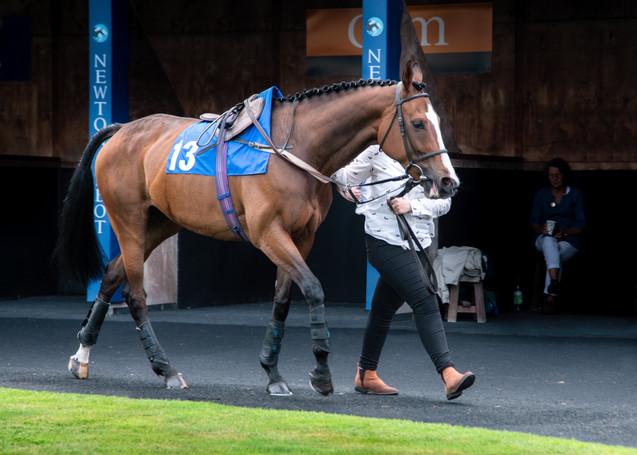 Horse Racing 2019.jpg