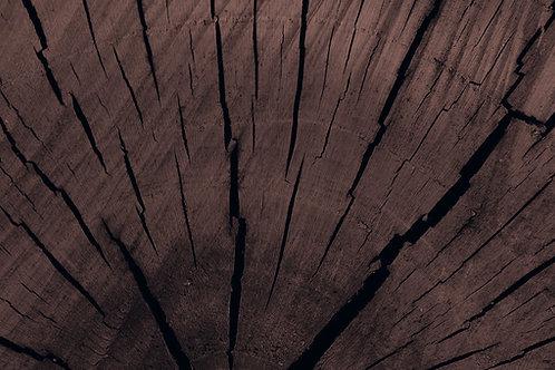 Giant Sequoia - $600