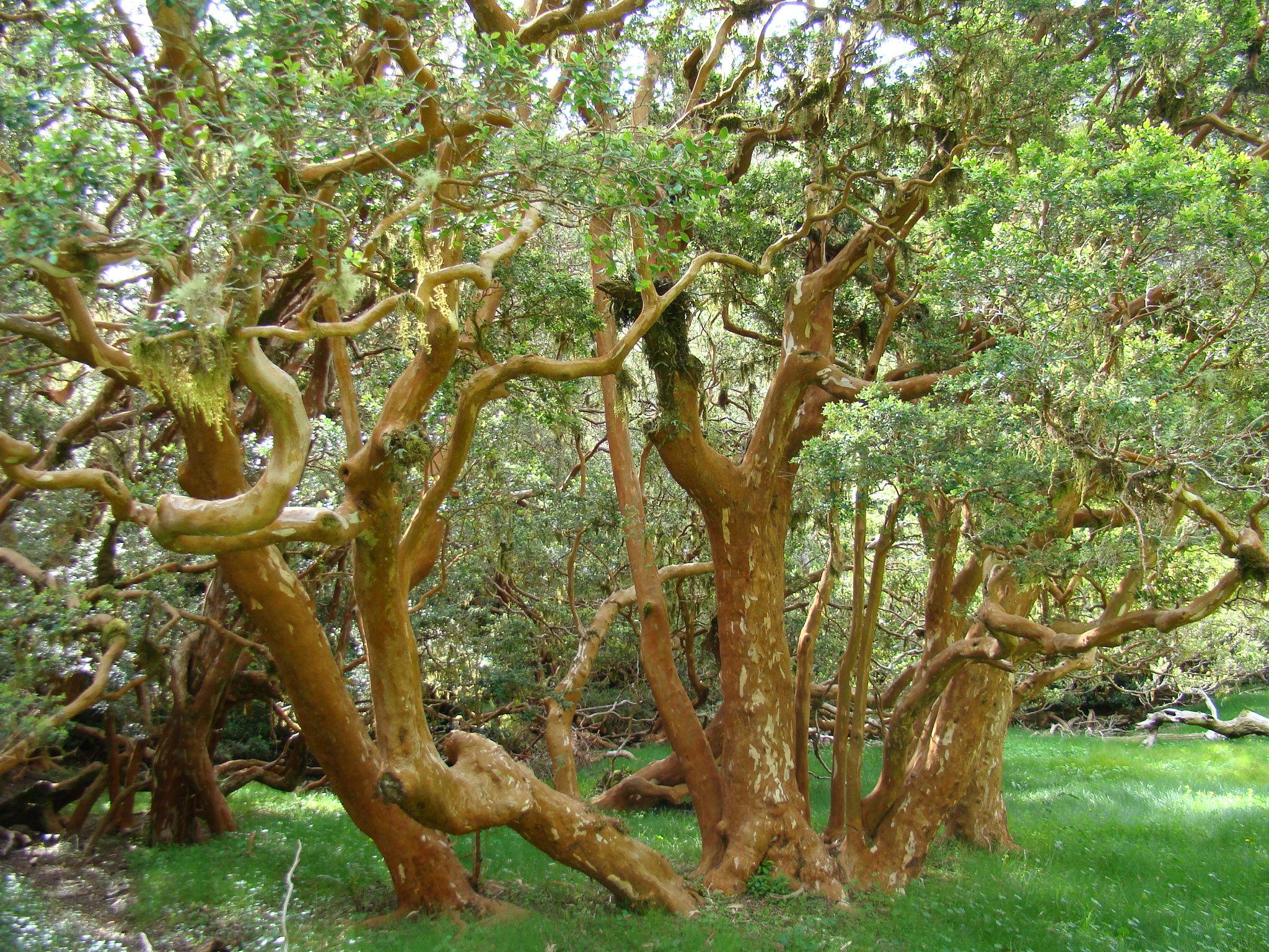 Bosques de Arráyanes