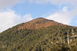 Bosques de Araucaria y Lenga