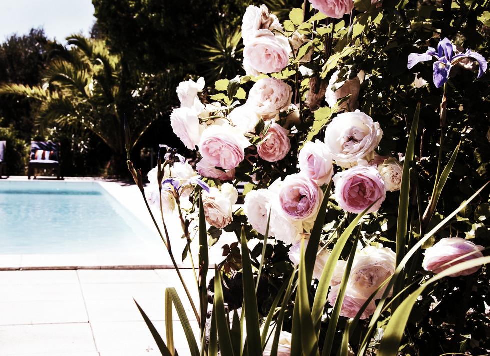 Piscine coin fleuri