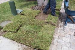 Sod-X team laying St. Augustine in a yard