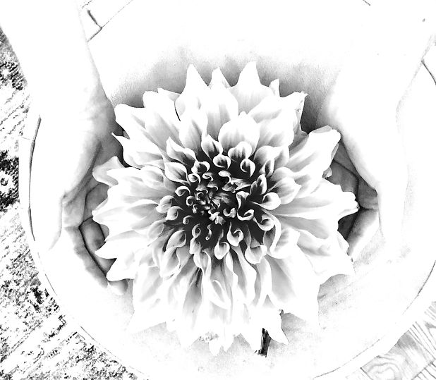 nina%20hands%20and%20flower%20reiki_edit