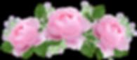 Rose Aromatherapie ätherisches öl wohlfühl-erlebnis