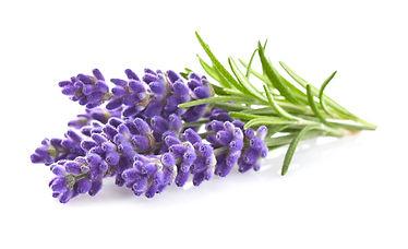 Lavendel Aromatherapie ätherisches öl wohlfühl-erlebnis