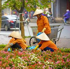vietnam jardinier