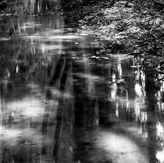 Ruisseau en sous bois