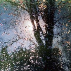 Reflets dans un bassin