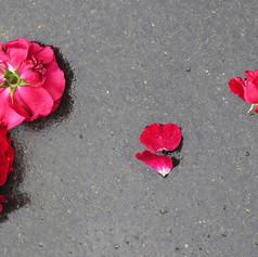 Roses-sur-bitume