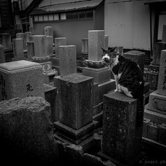 Cimetière Shintoïste - Kanazawa 2014