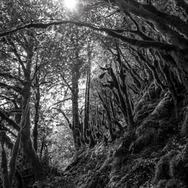 Forêt inquiétante