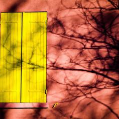 la_fenètre_jaune