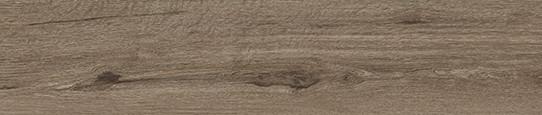 白露銀木單片圖