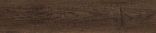 北美棕胡桃單片圖