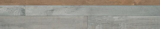 曼陀林單片圖